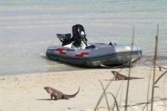 SW Allens Cay Bahamas 4685 © Ann DeMuth