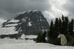 4020 hidden lk mtn goat Glacier Nat. Pk © Ann DeMuth