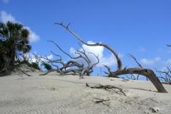 Cumberland Island GA 3625 © Ann DeMuth