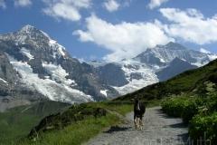 swiss alps goat 0652 © Ann DeMuth