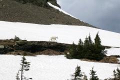 4001 hidden lk mtn goat glacier nat pk
