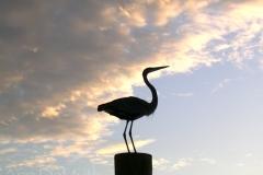 Great Blue Heron 5697 © Ann DeMuth