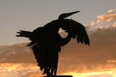 Great Blue Heron 5699 St. Augustine FL © Ann DeMuth