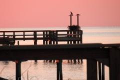 osprey sunset 140136 © Ann DeMuth
