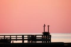 osprey sunset 140137 © Ann DeMuth