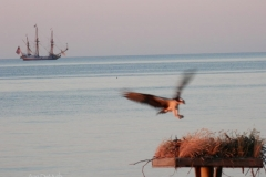 Osprey Tall Ship Northern Neck VA © Ann DeMuth