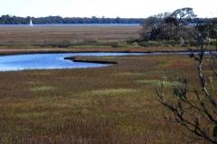 Stokes Conservation Land St. Augustine, FL © Ann DeMuth
