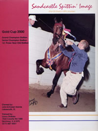 A full-page magazine ad for The Morgan Horse by A.D.design