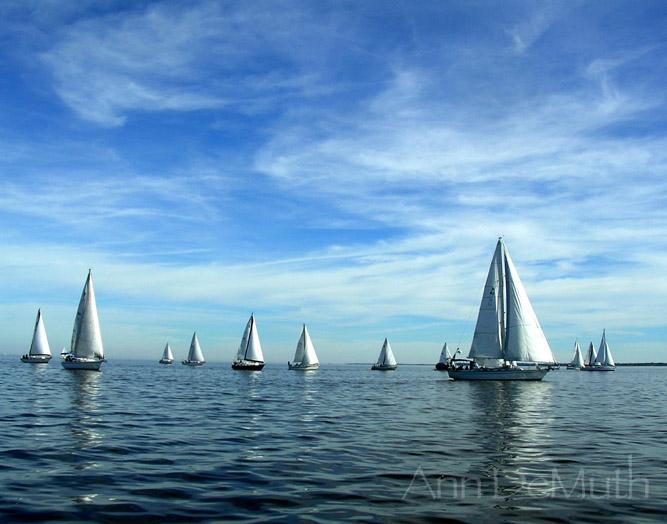 Sailboats Oriental, NC ©Ann DeMuth